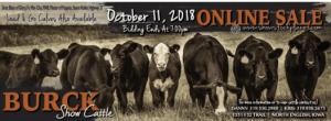 Burck Show Cattle Online Sale