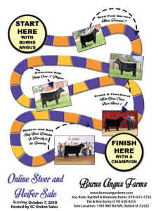 Burns Angus Online Steer & Heifer Sale