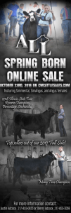 All Spring Born Online Sale