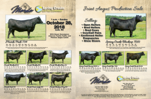 Marda and Spring Creek Joint Angus Production Sale @ Lodi | Wisconsin | United States