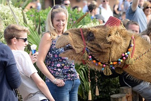 performing puppets live acts camels