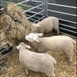 Mini Petting Farm