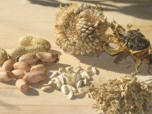 Ingredients For Homemade Bird Feeder Suet Blocks