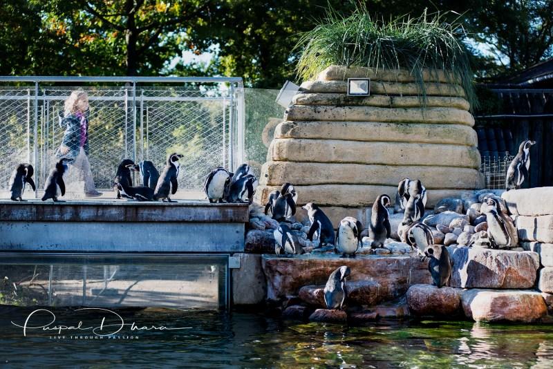 DSC_7246_zoo
