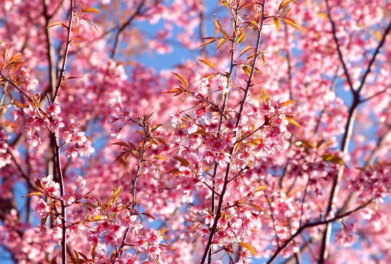 background-beautiful-bloom-479385