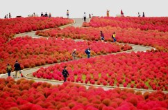 Hitachi-Seaside-Park (1)