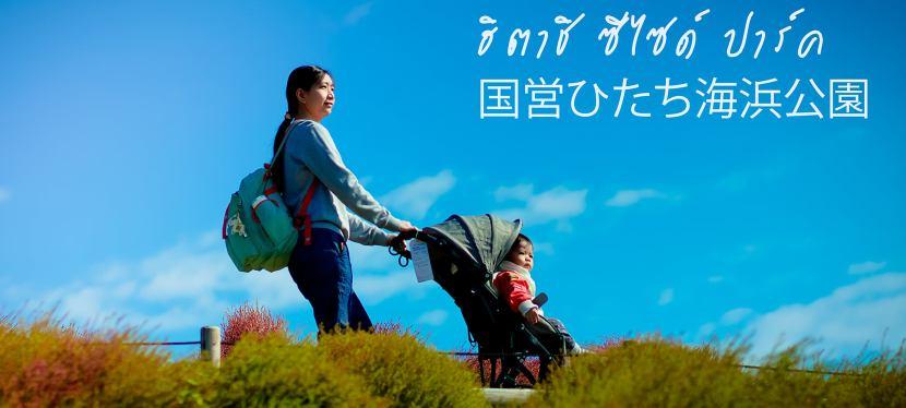 ฮิตาชิ ซีไซด์ ปาร์ค (HITACHI SEASIDE PARK) จ.อิบารากิ ญี่ปุ่น ในเดือนตุลาคม
