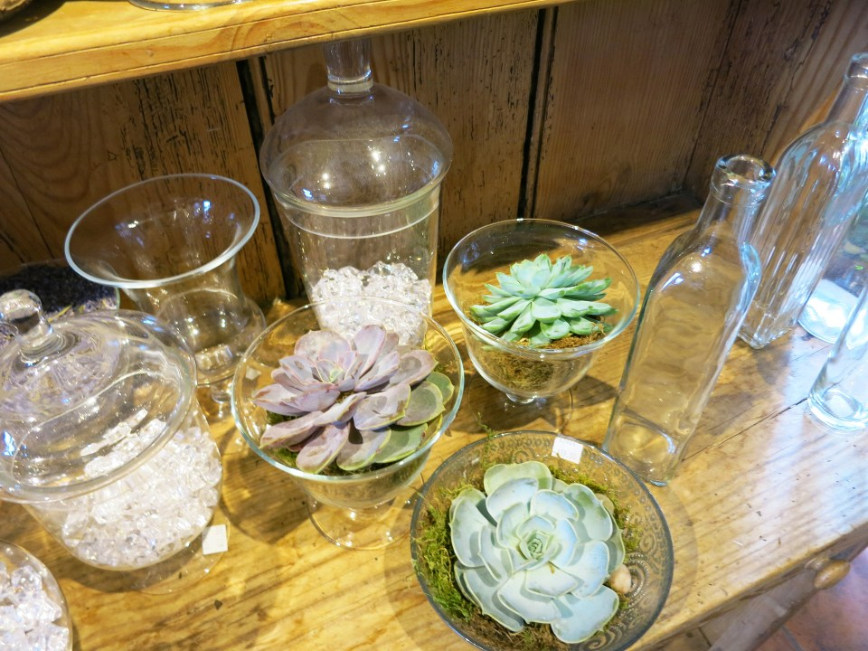 Glassware and succulents in Studio 539 located on Wickenden Street in Providence, RI