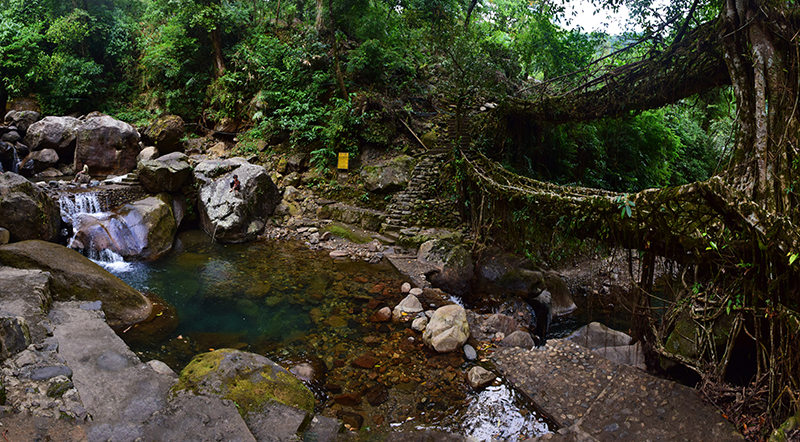 Panoramic view of root bridge