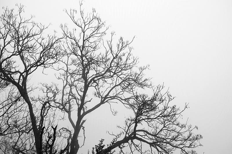 Foggy @ Kanatal