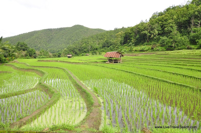 9 Rice Fields