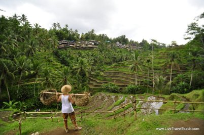 Tegalalang Rice Terraces - A Beautiful Landscape