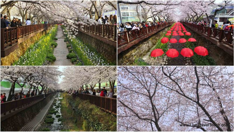 Spring in Korea