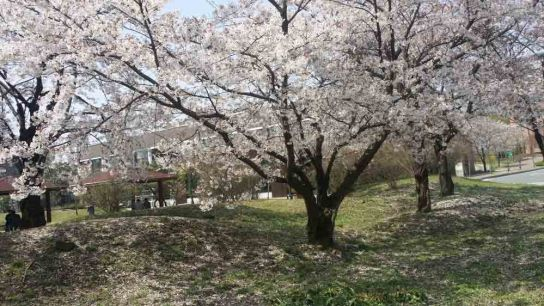 Best Spring Hikes in Korea