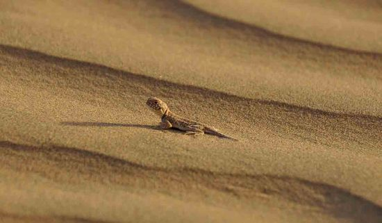 camel safari jaisalmer tripadvisor