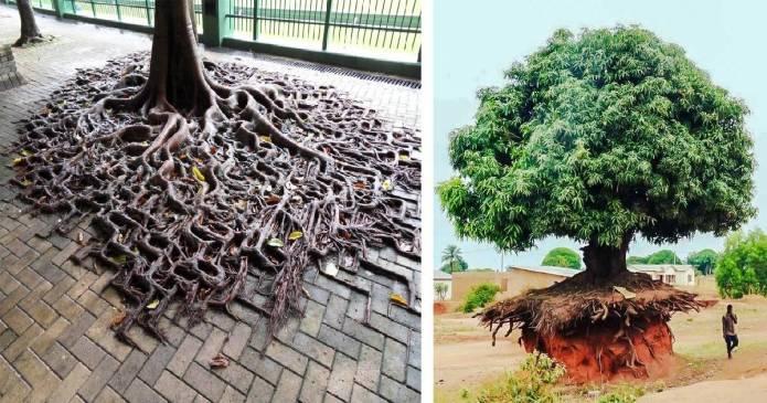 20 de copaci care ne dovedesc ca lupta pentru viata trebuie sa fie mereu pe primul loc