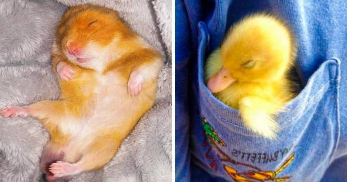 20 de animale de companie care adora sa doarma in cele mai neobisnuite locuri