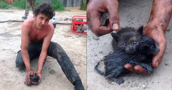 Un tânăr a salvat nişte pisoi din petrolul deversat accidental şi le-a oferit o casă nouă