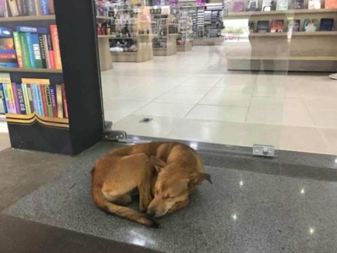 Câine ajunge viral după ce fură o carte dintr-o librărie. Angajații îl iubesc!