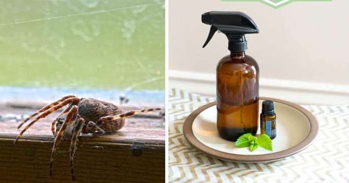 Nu mai folosiți chimicale pentru a scăpa de paianjeni. Vă arătăm câteva trucuri naturale pentru a scăpa de ei