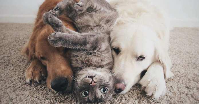 Faceți cunoștință cu cei mai buni prieteni! O pisică și doi câini adoră să facă totul împreună