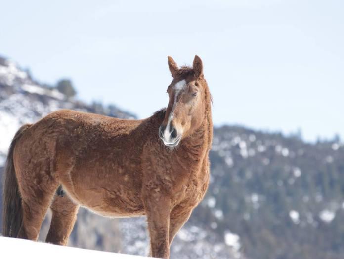 Legătura specială dintre doi cai sălbatici. Asta dovedește că și animalele au suflet!