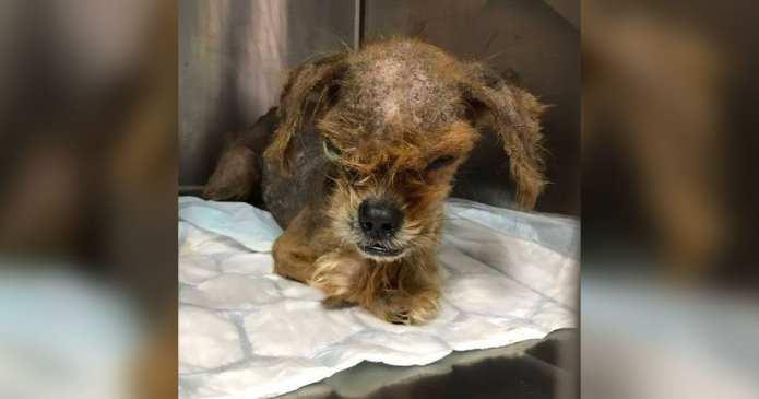 Câine de nerecunoscut după ce a fost salvat. Atunci când l-au găsit era aproape de un dezastru, dar priviți de ce transformare uimitoare a avut parte!