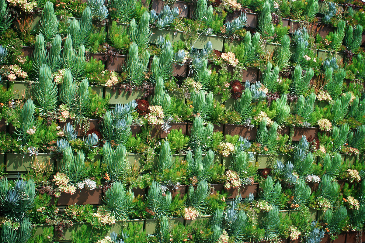 Livewall green wall system make conferences more comfortable - Succulent Plants Grow In Green Wall Succulent Plants Grow In Green Wall Livewall Green Wall System Make Conferences More Comfortable