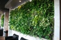 LiveWall Green Wall System   LiveWall Green Wall Enlivens ...