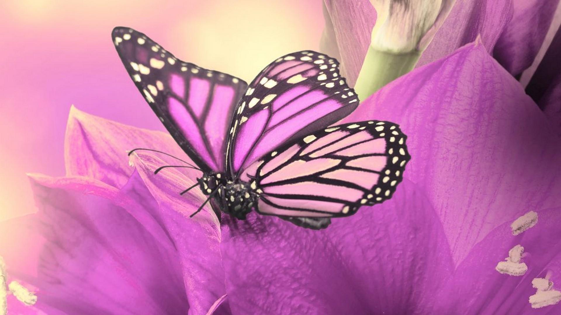Cute Pink Computer Wallpaper Wallpaper Hd Cute Butterfly 2019 Live Wallpaper Hd