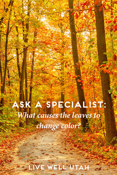 Ask a Specialist: What Causes Leaves to Change Color?
