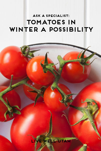 winter-tomatoes