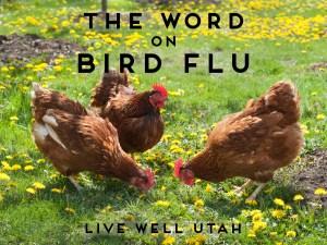 Bird Flu Blog