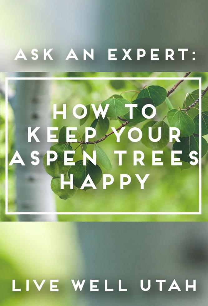 Aspen Trees Graphic - Copy