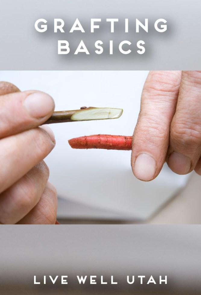 Grafting Basics