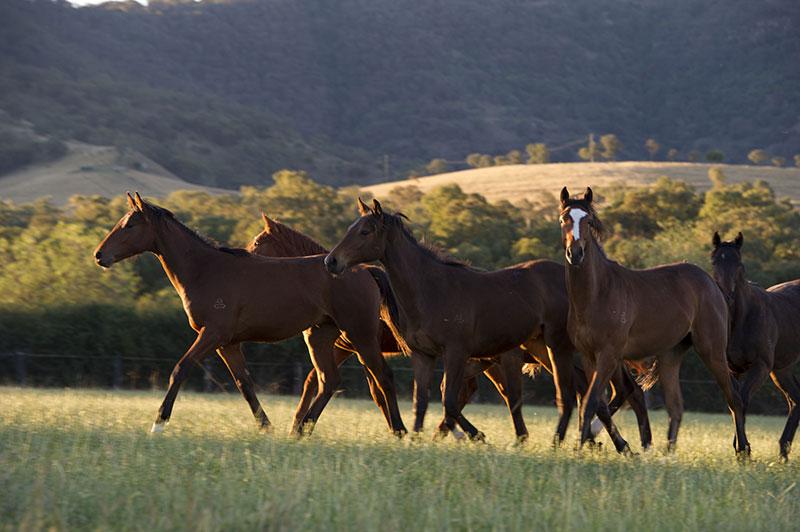 Equine Industry