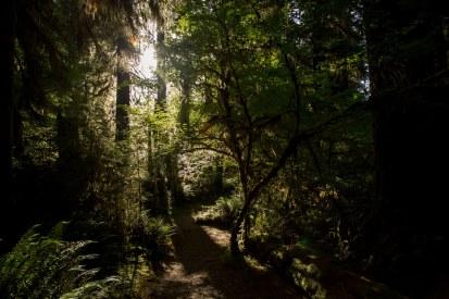 Hoh Rainforest, Olympic National Park, Wa.