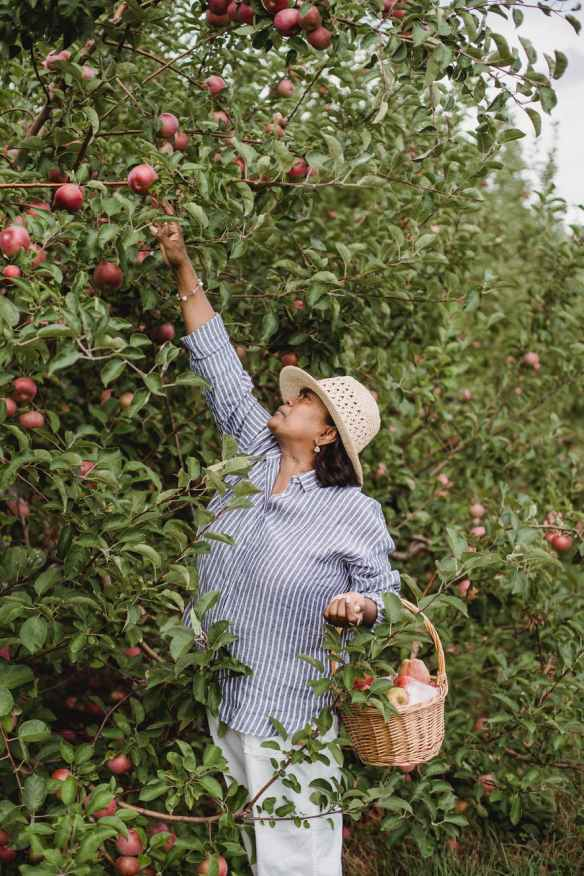 ethnic gardener collecting apples from tree on farm