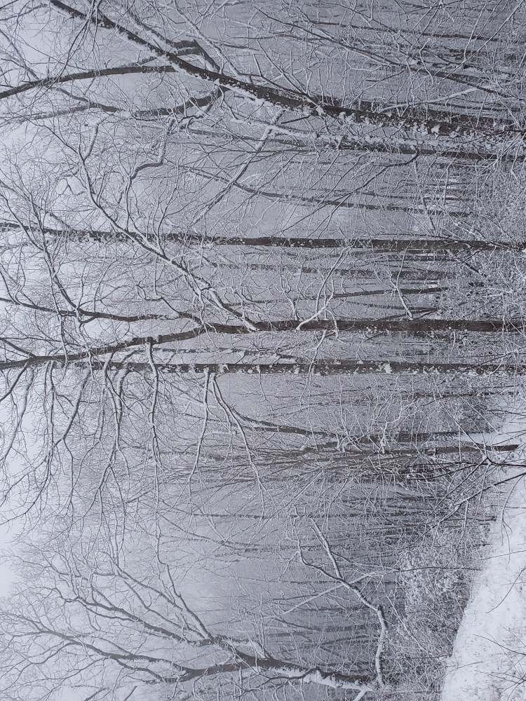 sparkling white covers the woods