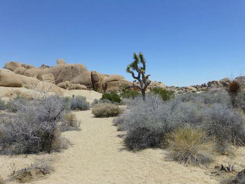 Skull Rock Trail