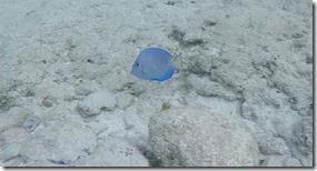 cozumel snorkeling 4