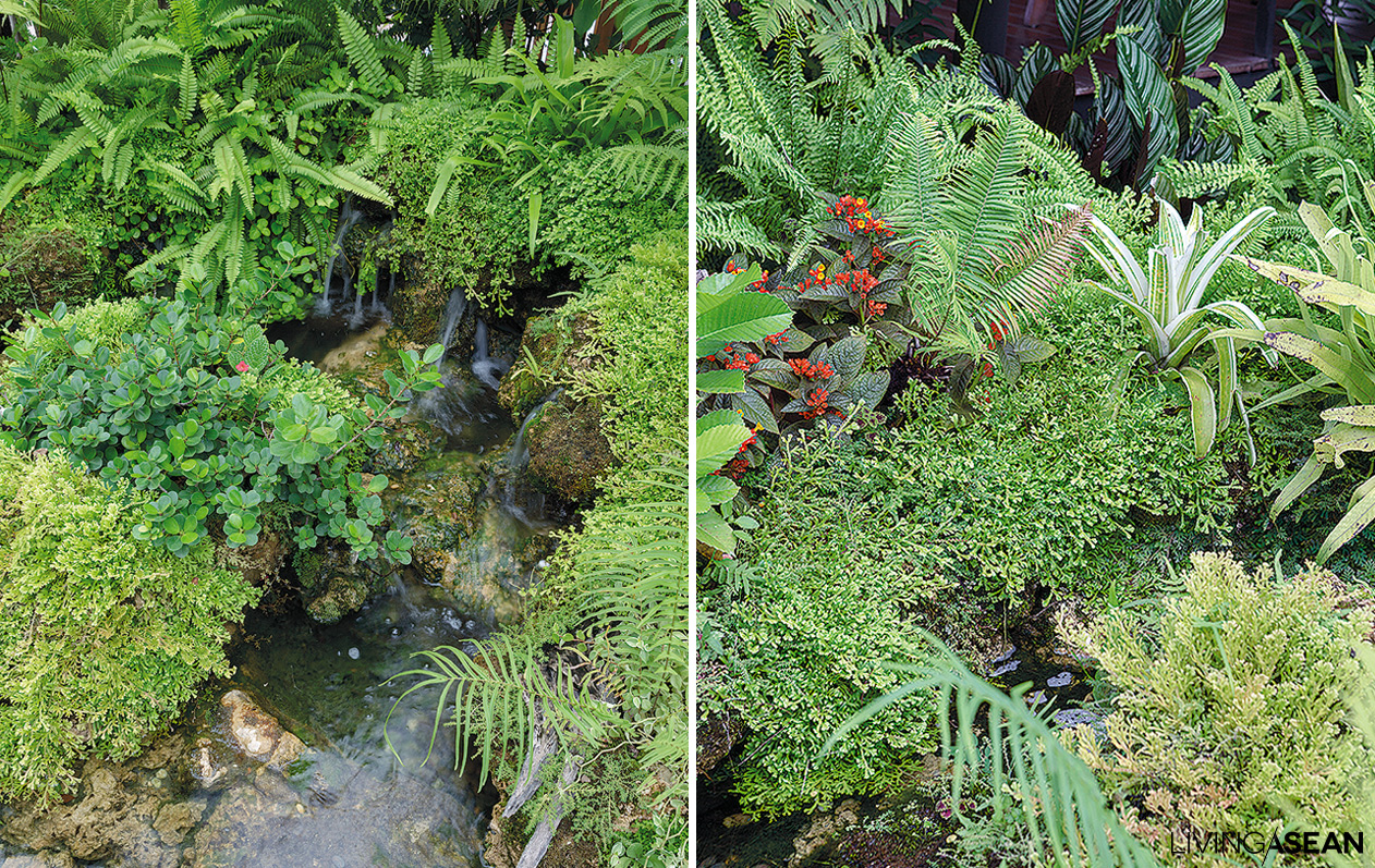 10 Great Plants For Tropical Rainforest Landscaping