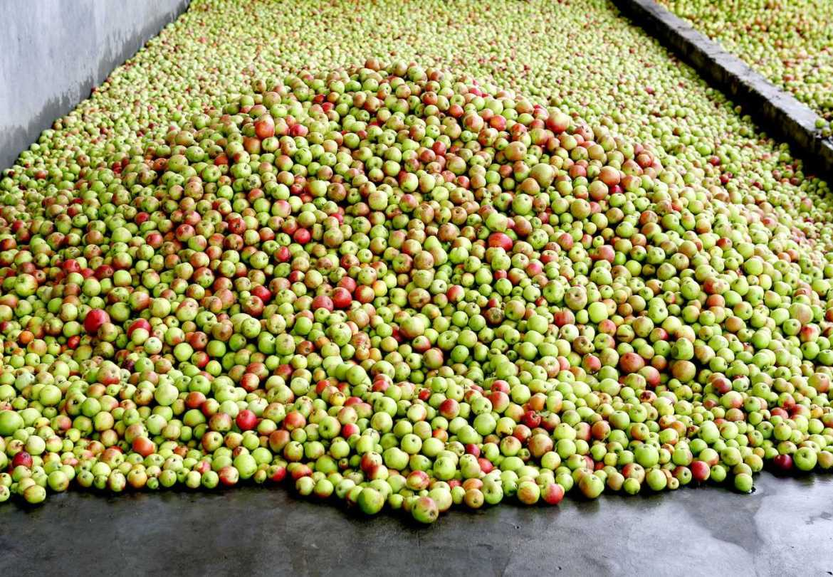 apples for production of cider