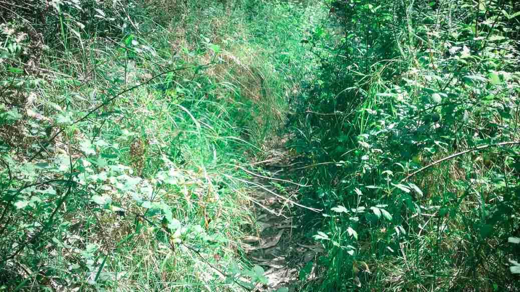 A path through nature