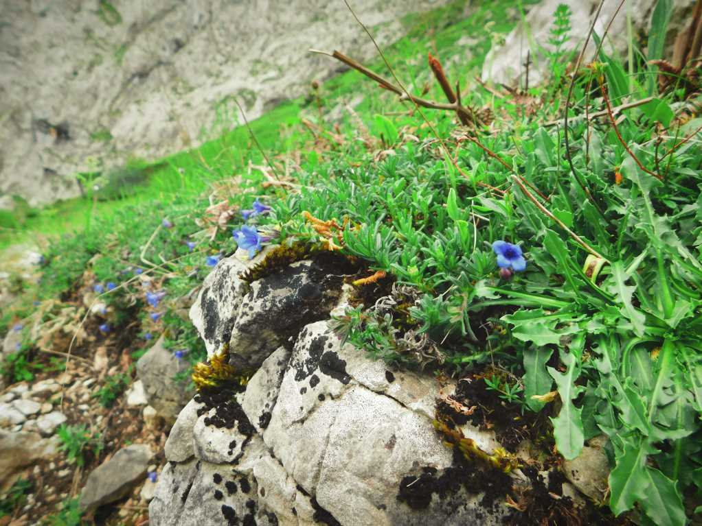Flowers nature on rock