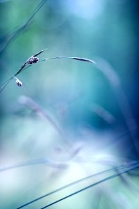 Simple_things_by_valeriemonthuit