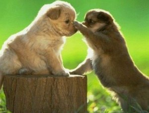 tip of the nose puppies.001