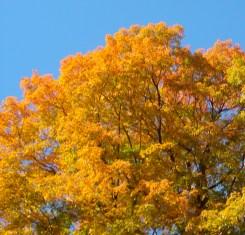blue-sky-autumn-leaves-sf