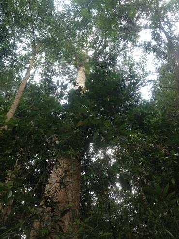 HUUUGE Trees