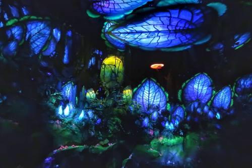 Pandora World of Avatar at Disney's Animal Kingdom